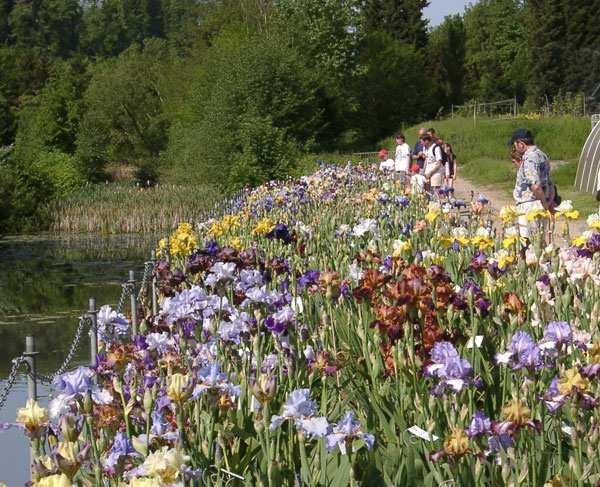 Franciris 2005 exposition florale d 39 iris en yvelines for Jardin yvelines